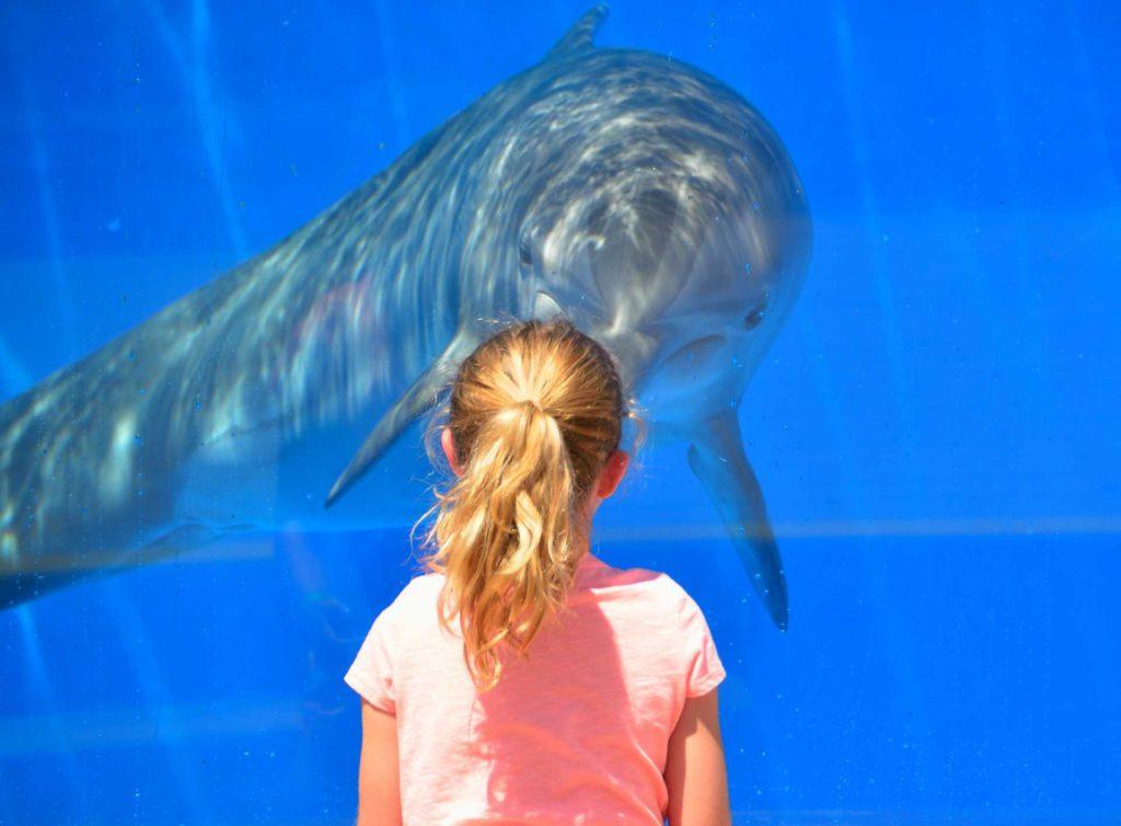 Kind und Delfin
